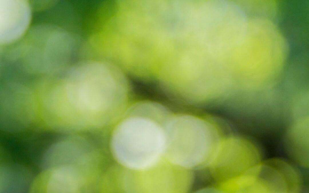 Hva er GrønnØkuBlogg?