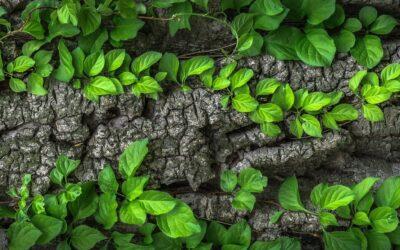 Rytme – refleksjon om en liturgisk, grønn praksis
